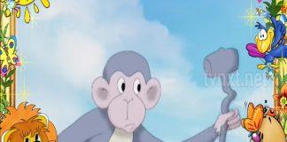Kapish The monkey TVNXT KIDZ