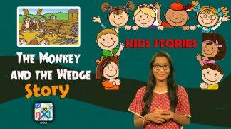 monkey & widge
